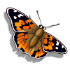 Painted Lady Butterfly-icon
