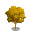 Lacebark Elm Tree-icon