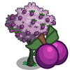 Plum Tree-icon