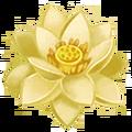 American Lotus.png