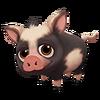 Baby Black Spotted Ossabaw Hog