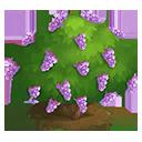 Purple Lilac Tree