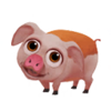 Baby Hereford Pig