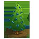 Irish Juniper Tree