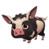 Black Spotted Ossabaw Pig