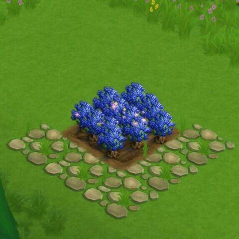 File:BlueberryField.jpg