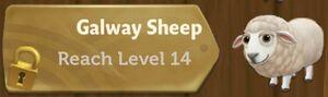 Galway Sheep