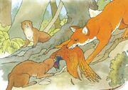 Foxotterfight