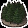 Black Cedar Forest