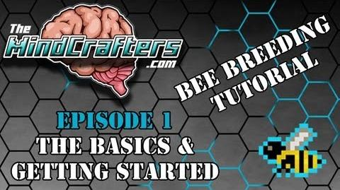 Bee Breeding Tutorial - Episode 1 The Basics & Getting Started-0