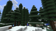 Firtrees