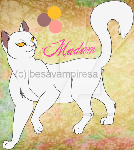 File:Felidae novel characters madam by besavampiresa-d8quv4q - Copia.png