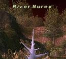 River Murex