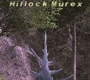 Hillock Murex