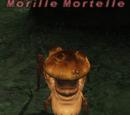 Morille Mortelle