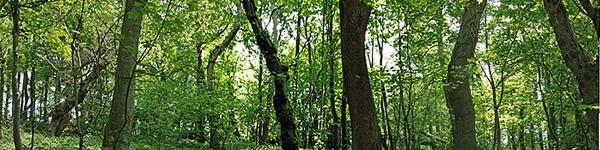 File:Habitat-woodland.jpg