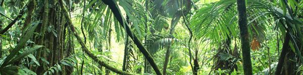 File:Habitat-jungle.jpg