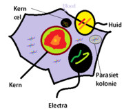 EnergieAnatomie
