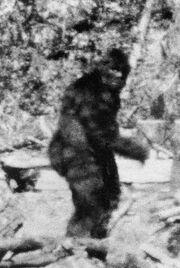Bigfootcalifornia1967-1-