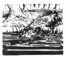 Northern Crocodile