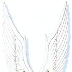 Angel Wings artwork.