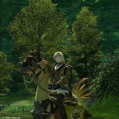 A female hyur character riding a Gridanian chocobo (Legacy).