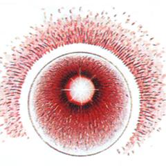 Nepto Eye.