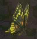 LRFFXIII Sunny Butterfly