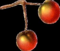 Pepio Nut