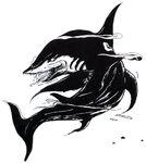 Shark ff1.jpg