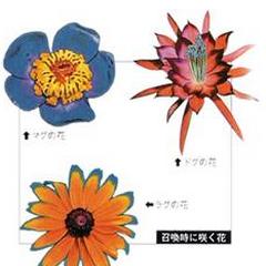 Magus Sisters' Flowers.
