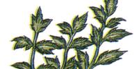 Echo Herbs