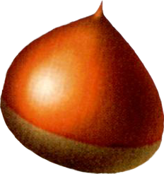File:Luchile Nut.png