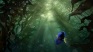 Dory Kelp Forest