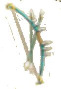File:Dragon Arrow (TS Artwork).png