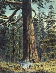 Black-forest-sequoia