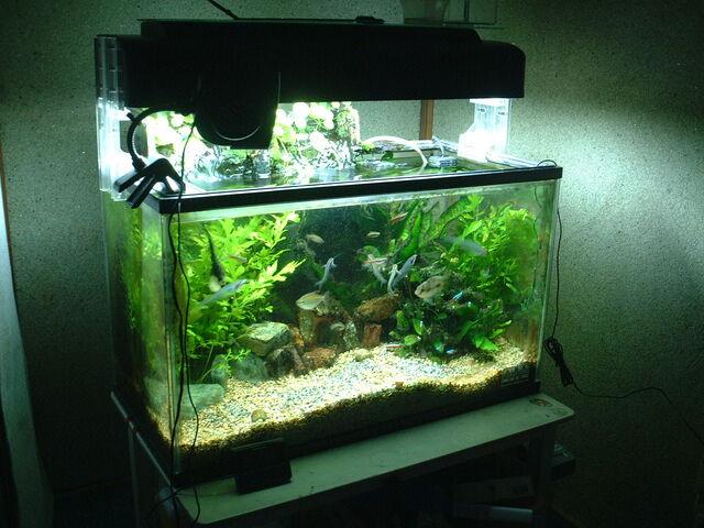 File:Aquarium 60cm.jpg