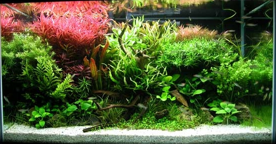 File:58g aquascape.jpg