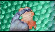 Fish Flakes 44