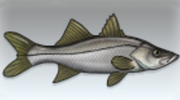 File:Snook.jpg