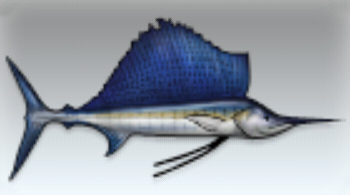 File:Sailfish.jpg