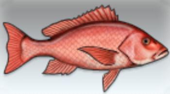 File:Red Snapper.jpg