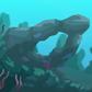 Green Coral (mini)