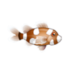 Spotted Sweetlips (1)