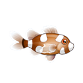 Spotted Sweetlips (1).png