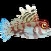 Scooter Dragonet (1)