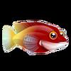 Cuban Hogfish (2)