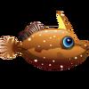 Slender Filefish (1)