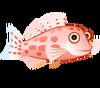 Coral Hawkfish (baby)