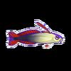 Purple Firefish (1)